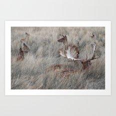 Richmond deers Art Print