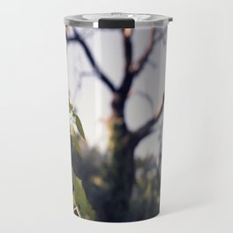 Old Tree, Color Film Photo Travel Mug