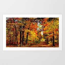 usa wisconsin wood autumn trees leaf fall brightly expensive Art Print