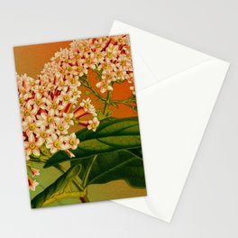 Floral Branch Stationery Cards