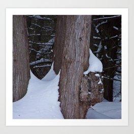 Snowy Pine Burl Art Print