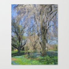 Weeping Cherry Canvas Print