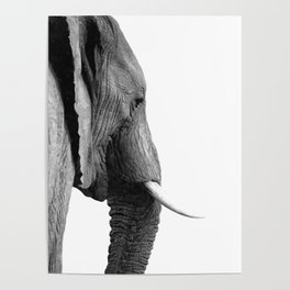 Black and white elephant portrait Poster