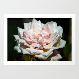 Hollywood Flower Art Print
