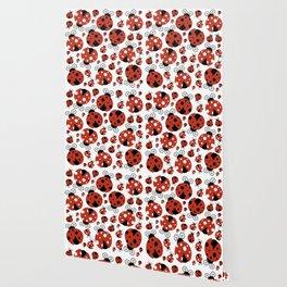 Ladybugs (Ladybirds, Lady Beetles) - Red Black Wallpaper