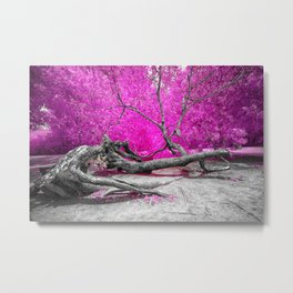 Dried Tree Metal Print