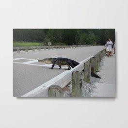 Alligator Watch Metal Print