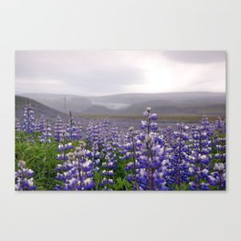 Lupins. Canvas Print