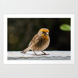 birdseed Art Print