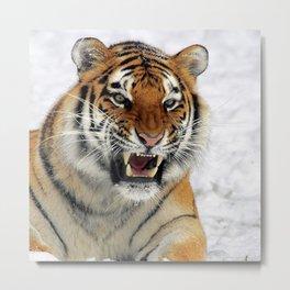 Tiger_2015_0124 Metal Print