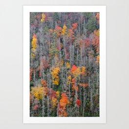 Fall Foliage, Autumn Forest Art Print