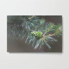 Pine Cone 4 Metal Print