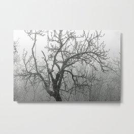 Black and white naked tree Metal Print