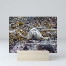 Young seal in the seaweed Mini Art Print