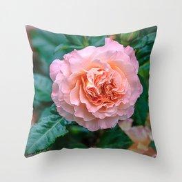 Beauty of a rose Throw Pillow