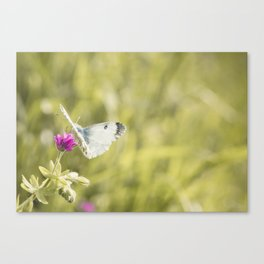 Butterfly on a spring flower Canvas Print