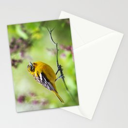 Spring Oriole Stationery Cards