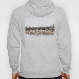 Snowy Sheep Stare Hoody