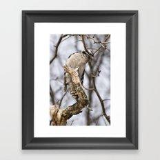 Hairy Woodpecker Framed Art Print