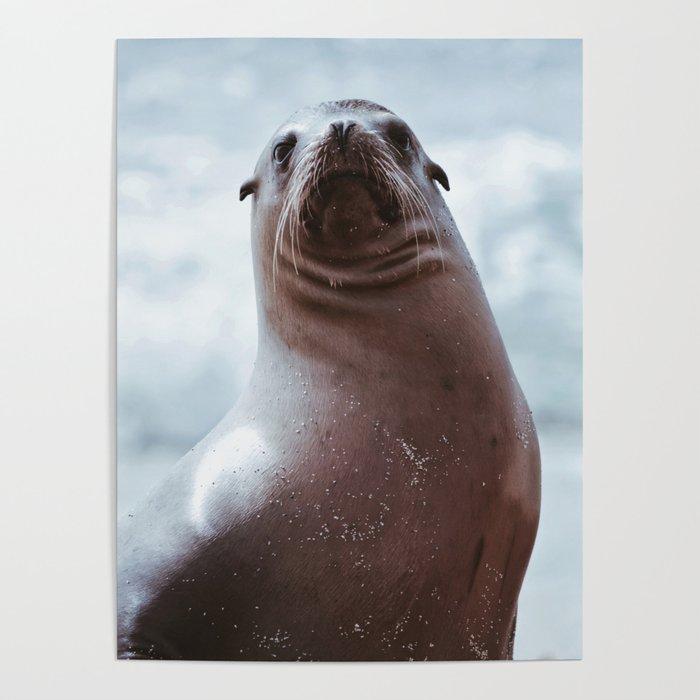 Sea Lion Love Poster