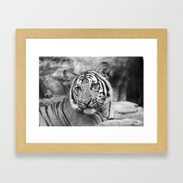 Tiger#4 Framed Art Print