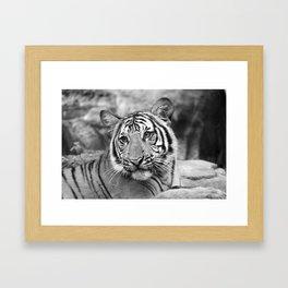 Tiger#4 Framed Art Print
