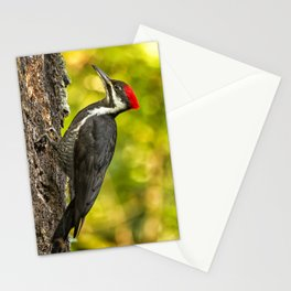 Female Pileated Woodpecker No. 2 Stationery Cards