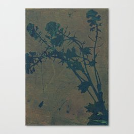 Botanica No. 8 Canvas Print