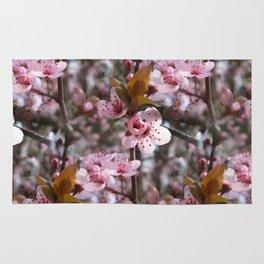Spring Cherry Blossoms Rug