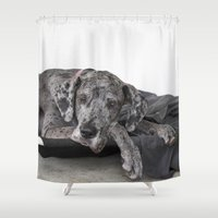great dane Shower Curtains featuring Great Dane waiting by Deborah Janke