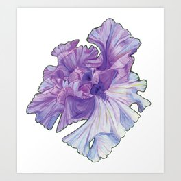 Lace Iris Art Print