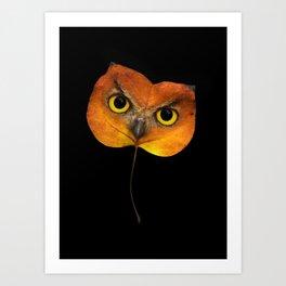 Autumn Owl-2 Art Print