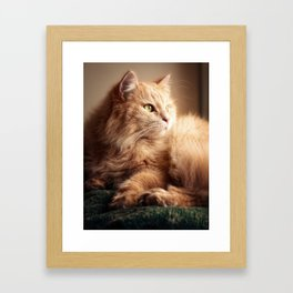 Portrait of Mr. Cesare in the sunset light. Framed Art Print