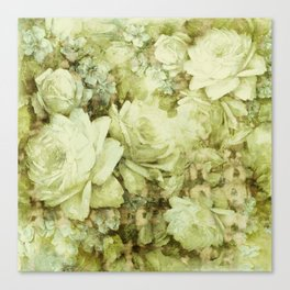 white climbing rose Canvas Print