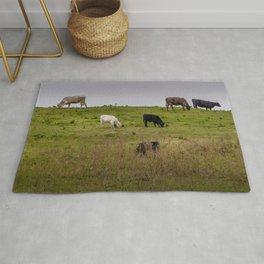 Irish Cattle grazing  Rug