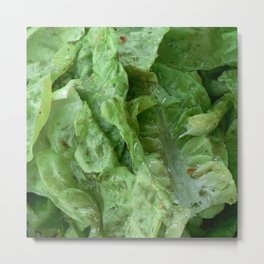 Healthy salad with wonderful herbs Metal Print