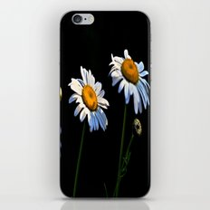 You're a Daisy iPhone & iPod Skin