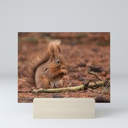 Nature woodland animals Red squirrel by a log Mini Art Print