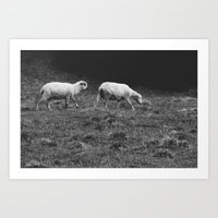sheep Art Prints featuring Sheep by Pati Designs & Photography