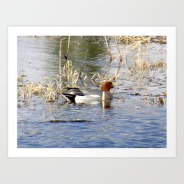 Ducks on Marsh Art Print