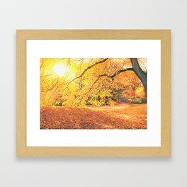 New York City Autumn Sun Framed Art Print