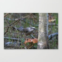 Bird getting ready for fall Canvas Print