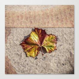 Simple Leaf Canvas Print