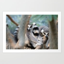 Curled Up Art Print