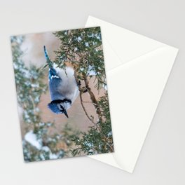 Hunkered Down (American Blue Jay) Stationery Cards