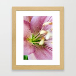 Pink Lily Flower Framed Art Print