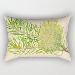 Abies bracteata Plant Vintage Botanical Evergreen Scientific Illustration Rectangular Pillow
