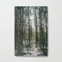 Shine through the forest Metal Print