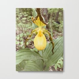 Yellow Lady Slipper Orchid Metal Print