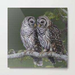 Barred Owls  Metal Print